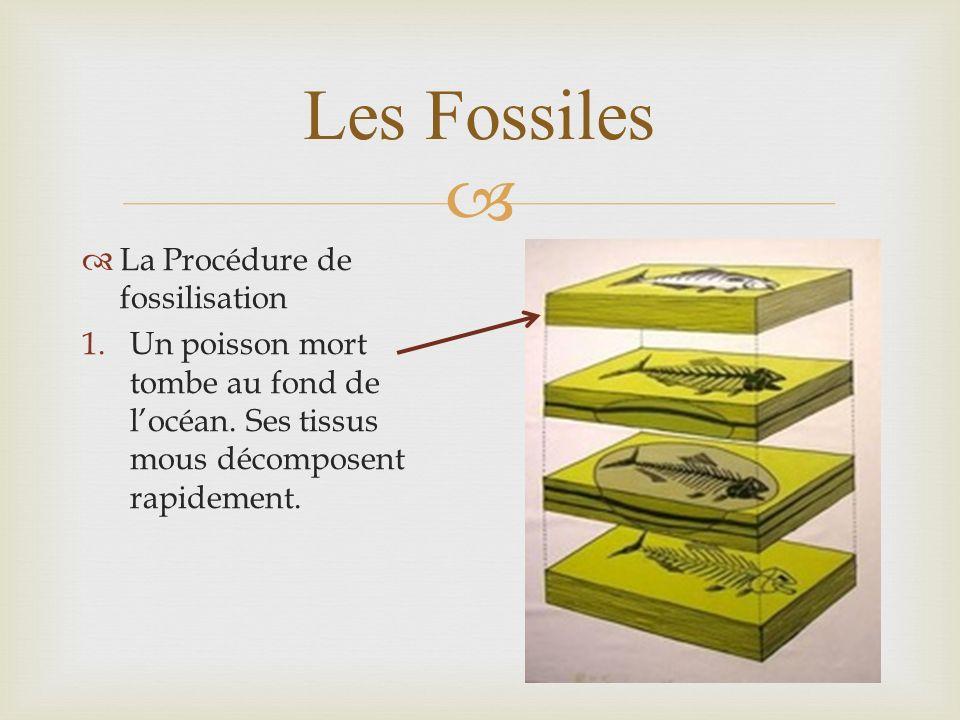 Les Fossiles La Procédure de fossilisation 1.Un poisson mort tombe au fond de locéan. Ses tissus mous décomposent rapidement.
