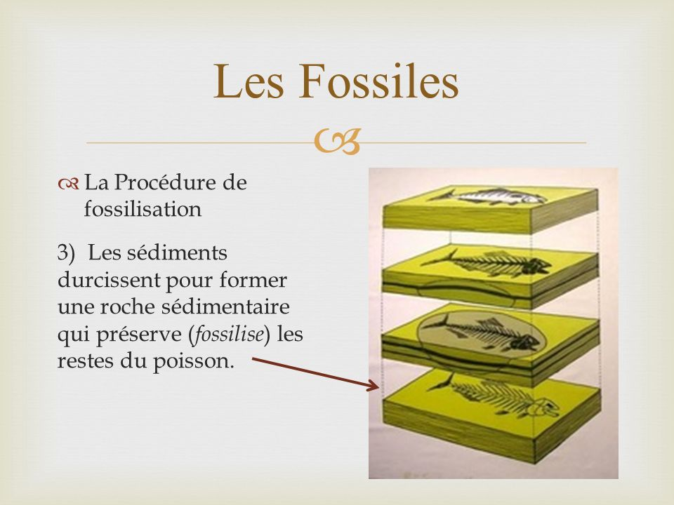 Les Fossiles La Procédure de fossilisation 3) Les sédiments durcissent pour former une roche sédimentaire qui préserve ( fossilise ) les restes du poi