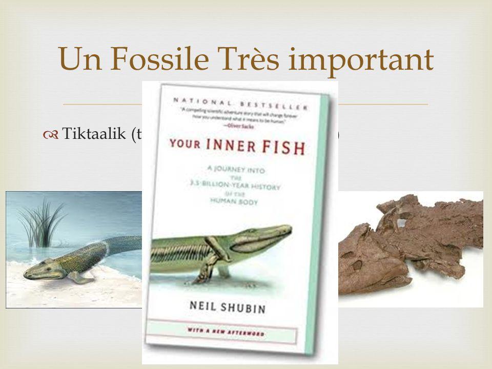 Tiktaalik (trouvé au Nunavut en 2004) Un Fossile Très important