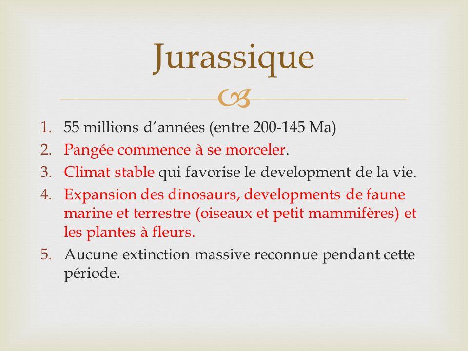 1.55 millions dannées (entre 200-145 Ma) 2.Pangée commence à se morceler. 3.Climat stable qui favorise le development de la vie. 4.Expansion des dinos