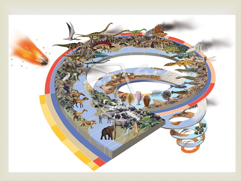 Lhistoire de la Terre: La Terre se forme il y a 4.6 Milliards dannées Les organismes vivants apparait il y a 600 Millions dannées Les ancêtres des humains apparait il y a 3.1 Millions dannées (0.083%) Introduction – Le Temps Géologique