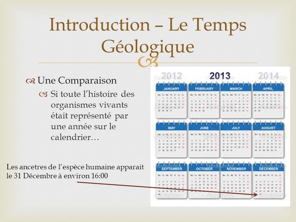 Une Comparaison Si toute lhistoire des organismes vivants était représenté par une année sur le calendrier… Introduction – Le Temps Géologique Les anc
