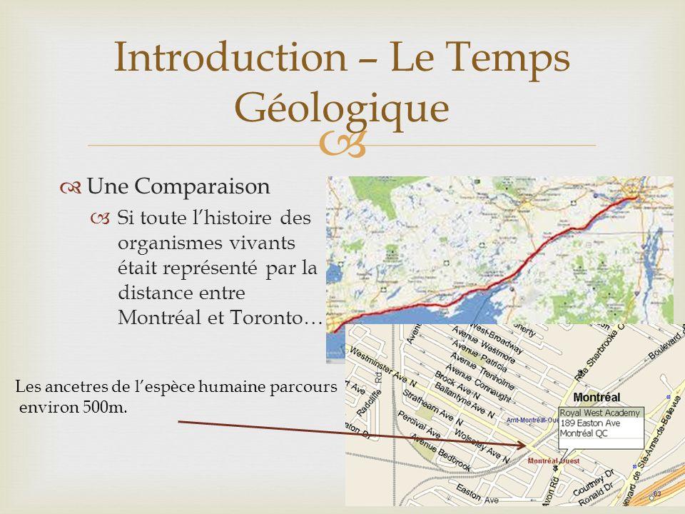 Une Comparaison Si toute lhistoire des organismes vivants était représenté par la distance entre Montréal et Toronto… Introduction – Le Temps Géologique Les ancetres de lespèce humaine parcours environ 500m.