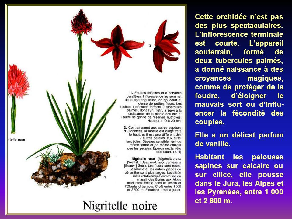 Comme son nom lindi- que, cette plante se rencontre surtout dans la chaîne des Alpes, mais on la trouve aussi dans les Pyrénées, et dautres montagnes