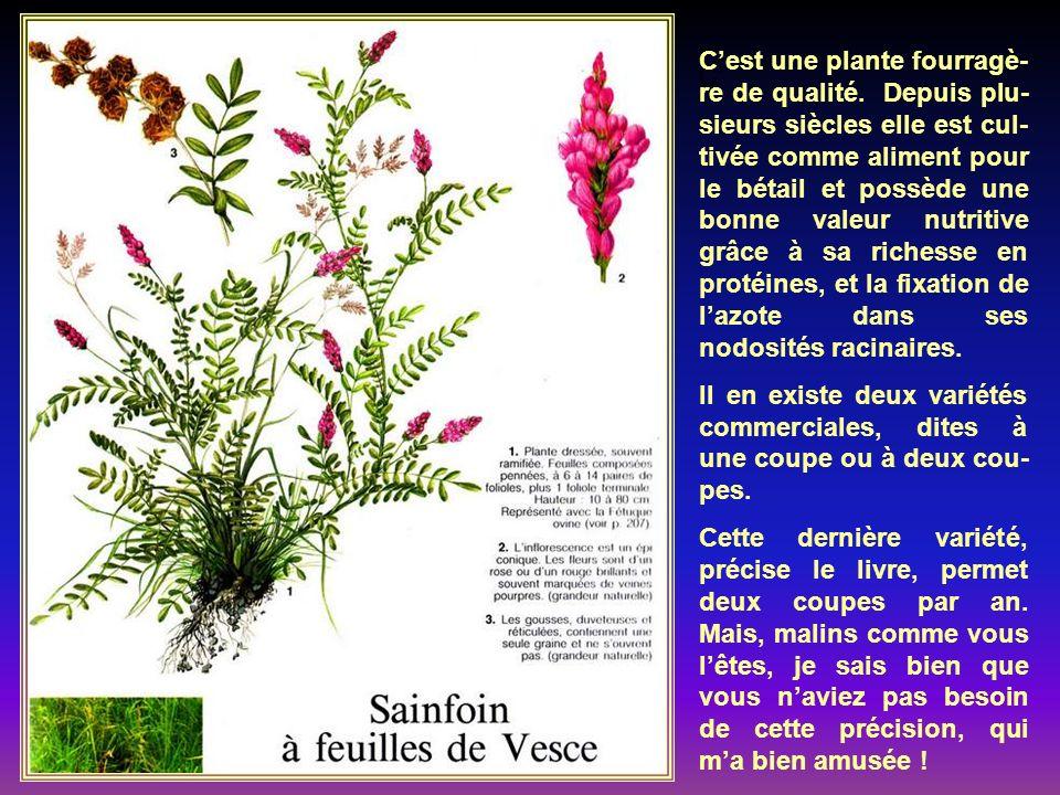 Il ne faut pas confon- dre les plantes culti- vées sous le nom de Géranium, et qui sont des pélargoniums ori- ginaires dAfrique du Sud, et les véritab