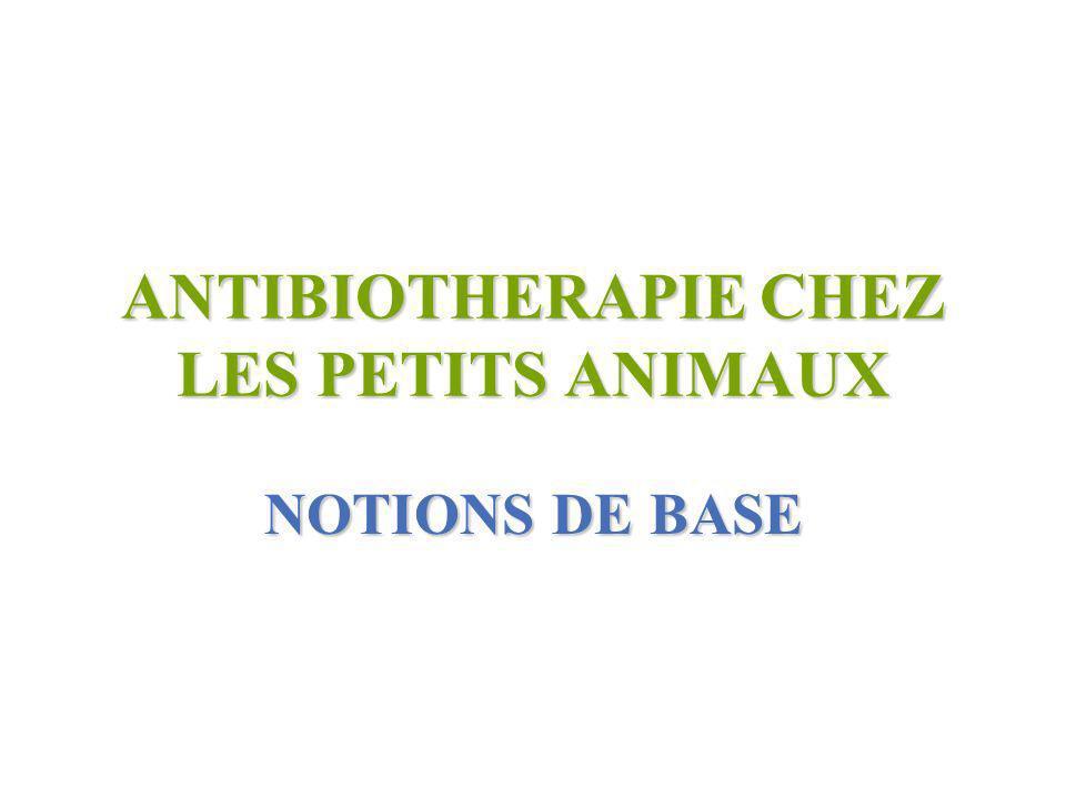 ANTIBIOTHERAPIE CHEZ LES PETITS ANIMAUX NOTIONS DE BASE