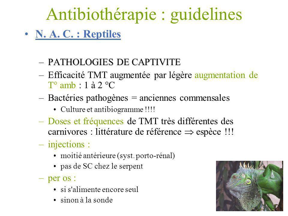 Antibiothérapie : guidelines N. A. C. : Reptiles –PATHOLOGIES DE CAPTIVITE –Efficacité TMT augmentée par légère augmentation de T° amb : 1 à 2 °C –Bac