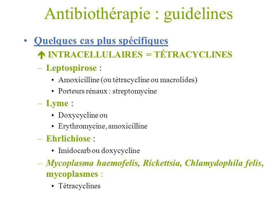 Antibiothérapie : guidelines Quelques cas plus spécifiques INTRACELLULAIRES = TÉTRACYCLINES –Leptospirose : Amoxicilline (ou tétracycline ou macrolide