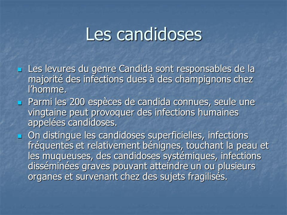 Pharmacocinétiques, posologies et ES (II) SporanoxTriflucanVfendCancidas AdministrationIV/POIV/POIV/POIV Biodisponibilité (%) 55 (variable ++) 9590<5 Dose de charge IV:200mh/12 h PO :400- 600mg/J 800MG(12mg/kg) Iv : 6mg/kg/12h Po : 400mg/12h 70 MG Dose dentretien Iv :200mg/J Po : 400mg/j 4OOmg/j(6mg/j) Iv : 4mg/kg/12h Po : 200mg/12 h 50mg/j <80kg 70 MG/j>80 kg Cl creat entre 10-50ml/min NON400mg/48h Voie orale (++) NON Cl creat <10 ml min 200mg/48 H 400mg/72h Voie orale (++) NON IH modérée NONNON2mg/kg/12h 35 mg ES fréquents Troubles digestifs, IC congestive Cholestase, cytolyse hépatique Troubles visuels, toxicité de lexcipient rénal RARES ET BENINS
