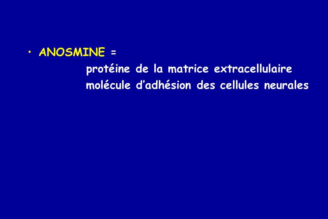 ANOSMINE = protéine de la matrice extracellulaire molécule dadhésion des cellules neurales