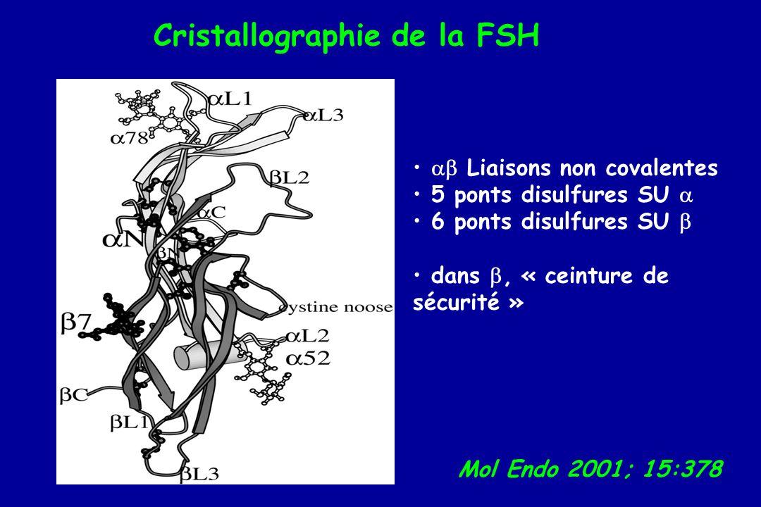Cristallographie de la FSH Mol Endo 2001; 15:378 Liaisons non covalentes 5 ponts disulfures SU 6 ponts disulfures SU dans, « ceinture de sécurité »