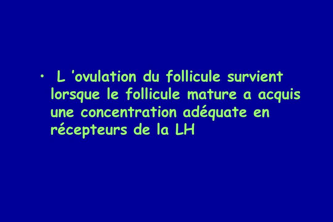 L ovulation du follicule survient lorsque le follicule mature a acquis une concentration adéquate en récepteurs de la LH