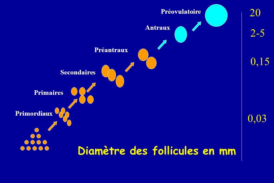 Primordiaux Primaires Secondaires Préantraux Antraux Préovulatoire 20 2-5 0,15 0,03 Diamètre des follicules en mm