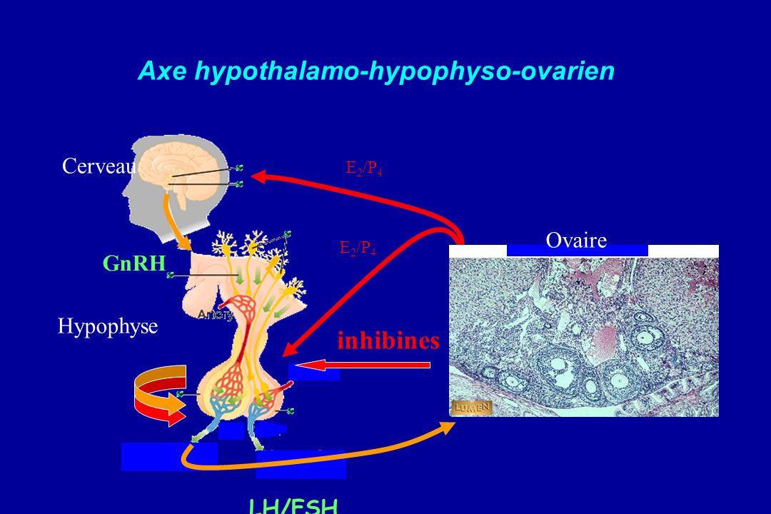 GnRH LH/FSH E 2 /P 4 Cerveau Hypophyse Ovaire Axe hypothalamo-hypophyso-ovarien inhibines