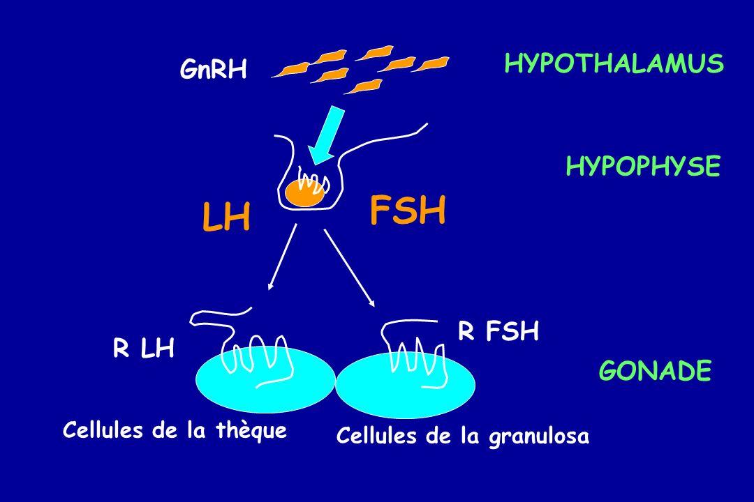 GnRH FSH LH Cellules de la granulosa Cellules de la thèque HYPOTHALAMUS HYPOPHYSE GONADE R FSH R LH