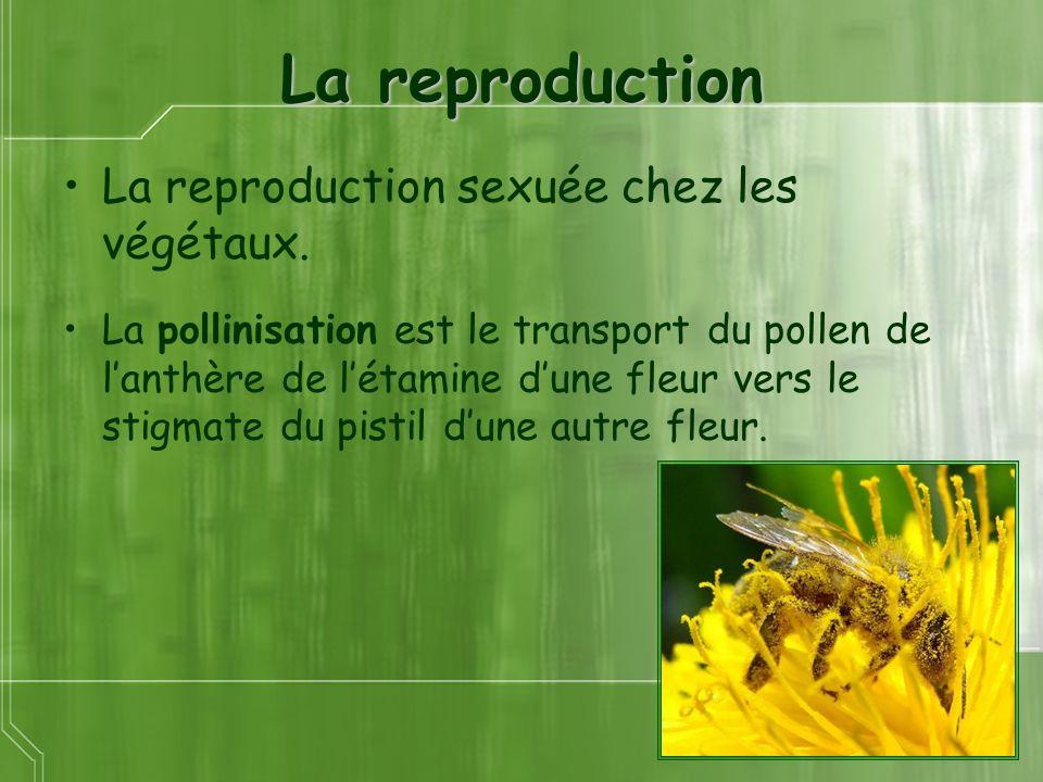 La reproduction La reproduction sexuée chez les végétaux. La pollinisation est le transport du pollen de lanthère de létamine dune fleur vers le stigm