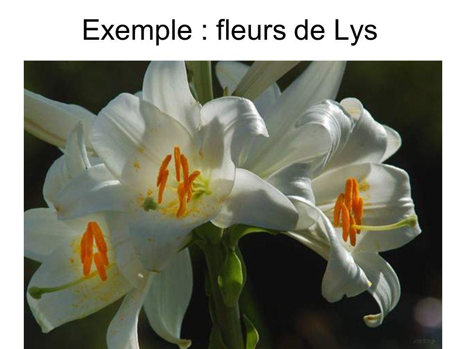Exemple : fleurs de Lys