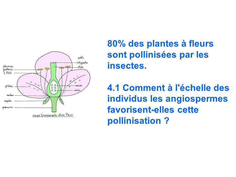 80% des plantes à fleurs sont pollinisées par les insectes. 4.1 Comment à l'échelle des individus les angiospermes favorisent-elles cette pollinisatio