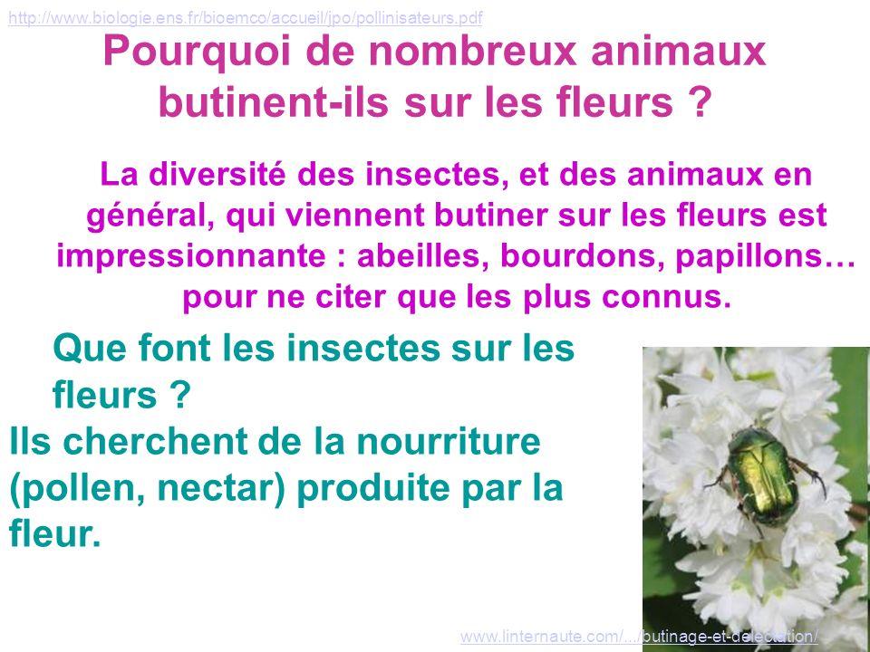 Pourquoi de nombreux animaux butinent-ils sur les fleurs ? La diversité des insectes, et des animaux en général, qui viennent butiner sur les fleurs e