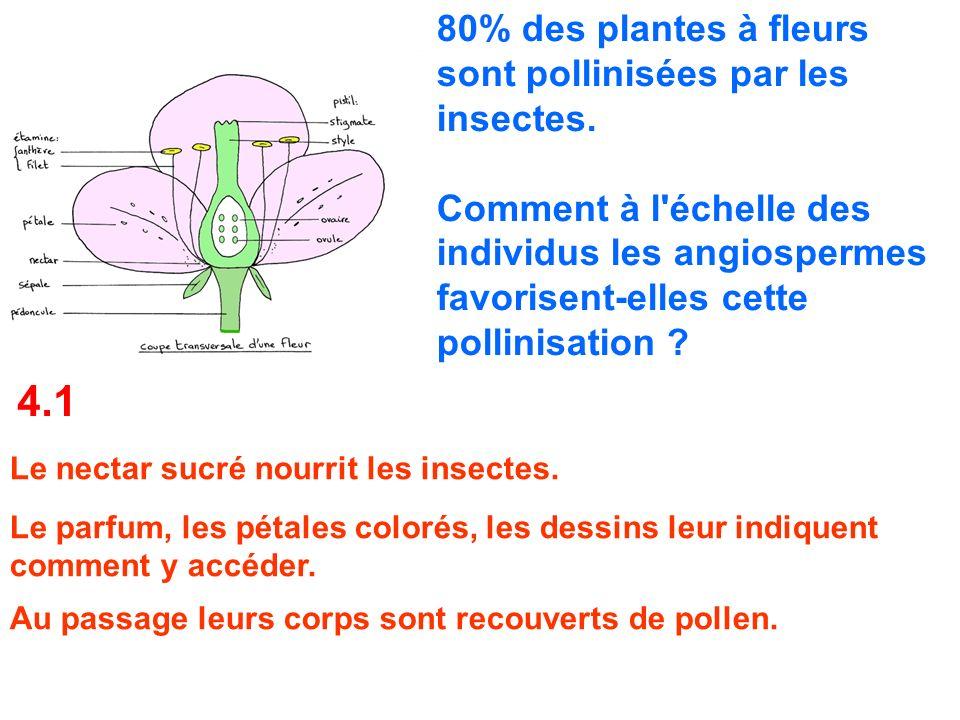 80% des plantes à fleurs sont pollinisées par les insectes. Comment à l'échelle des individus les angiospermes favorisent-elles cette pollinisation ?