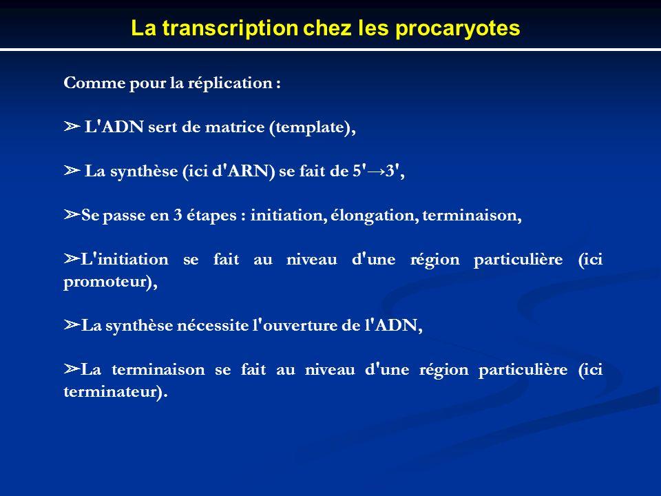 Comme pour la réplication : L'ADN sert de matrice (template), La synthèse (ici d'ARN) se fait de 5'3', Se passe en 3 étapes : initiation, élongation,