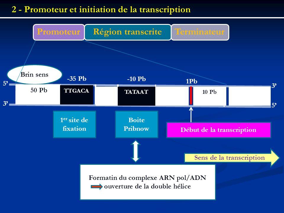 PromoteurRégion transcrite Terminateur 2 - Promoteur et initiation de la transcription 5 5 3 3 Brin sens -50 Pb TTGACA TATAAT -35 Pb -10 Pb 1Pb 10 Pb
