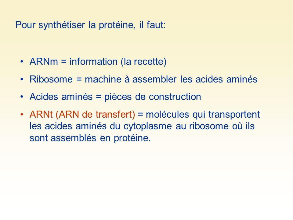 Pour synthétiser la protéine, il faut: ARNm = information (la recette) Ribosome = machine à assembler les acides aminés Acides aminés = pièces de construction ARNt (ARN de transfert) = molécules qui transportent les acides aminés du cytoplasme au ribosome où ils sont assemblés en protéine.