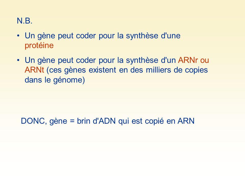 N.B. Un gène peut coder pour la synthèse d'une protéine Un gène peut coder pour la synthèse d'un ARNr ou ARNt (ces gènes existent en des milliers de c