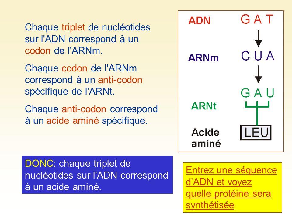 Chaque triplet de nucléotides sur l'ADN correspond à un codon de l'ARNm. Chaque codon de l'ARNm correspond à un anti-codon spécifique de l'ARNt. Chaqu