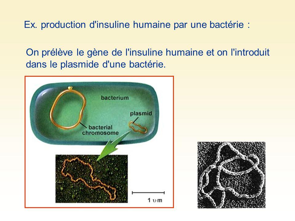 On prélève le gène de l'insuline humaine et on l'introduit dans le plasmide d'une bactérie. Ex. production d'insuline humaine par une bactérie :
