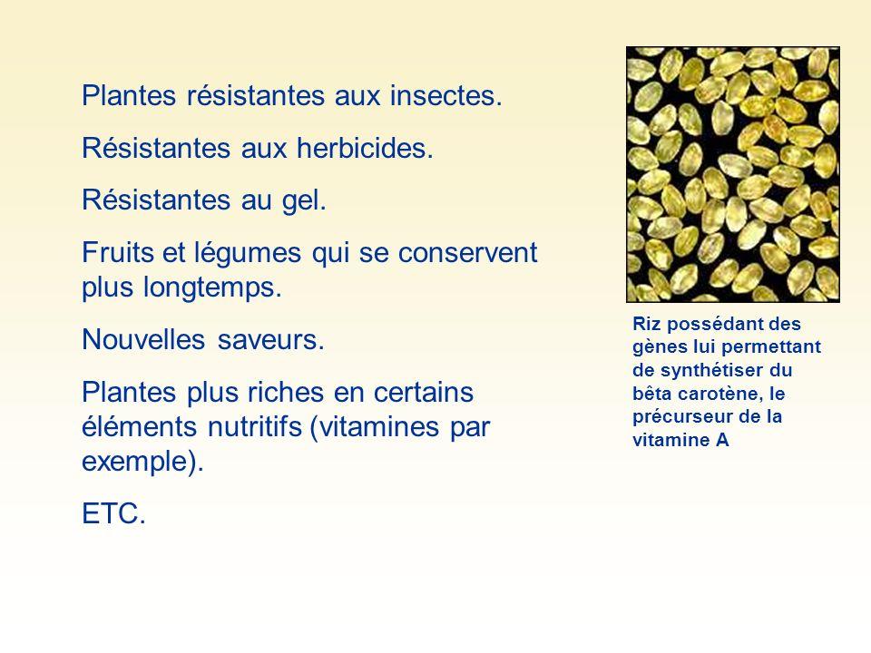Plantes résistantes aux insectes.Résistantes aux herbicides.