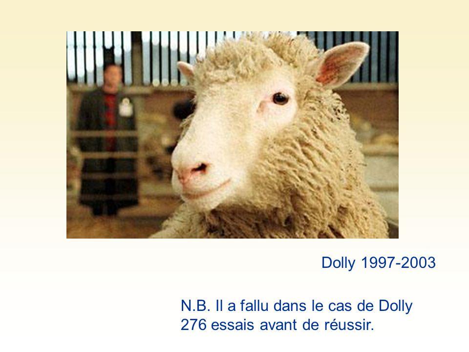 Dolly 1997-2003 N.B. Il a fallu dans le cas de Dolly 276 essais avant de réussir.