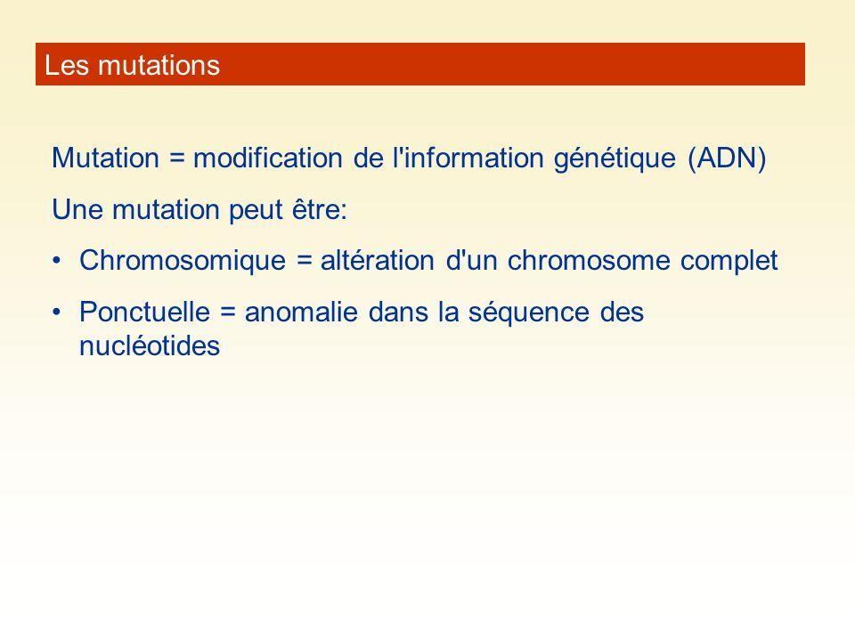 Les mutations Mutation = modification de l'information génétique (ADN) Une mutation peut être: Chromosomique = altération d'un chromosome complet Ponc
