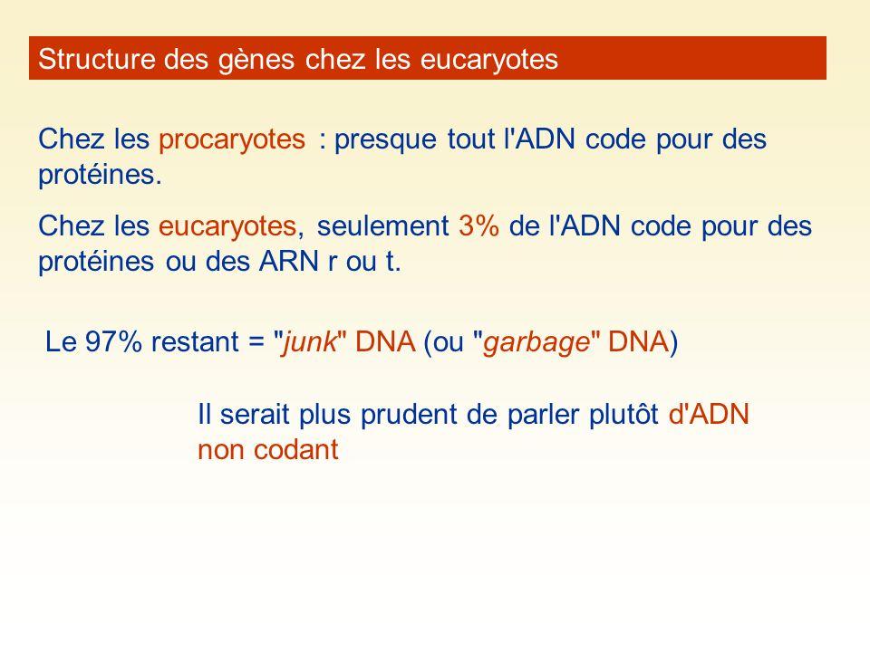 Structure des gènes chez les eucaryotes Chez les procaryotes : presque tout l'ADN code pour des protéines. Chez les eucaryotes, seulement 3% de l'ADN