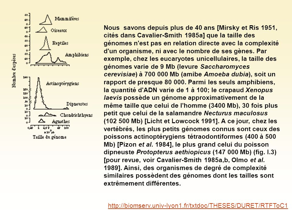 Nous savons depuis plus de 40 ans [Mirsky et Ris 1951, cités dans Cavalier-Smith 1985a] que la taille des génomes n est pas en relation directe avec la complexité d un organisme, ni avec le nombre de ses gènes.