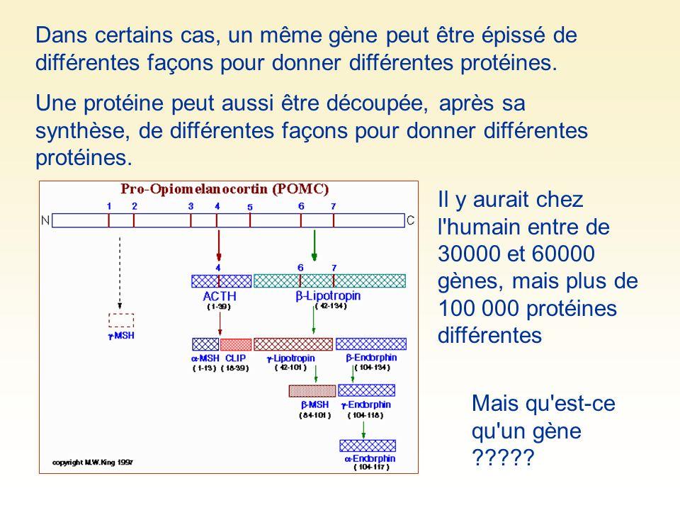 Dans certains cas, un même gène peut être épissé de différentes façons pour donner différentes protéines. Mais qu'est-ce qu'un gène ????? Une protéine