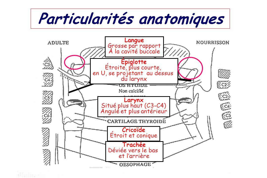 Particularités anatomiques Langue Grosse par rapport À la cavité buccale Épiglotte Étroite, plus courte, en U, se projetant au dessus du larynx Larynx