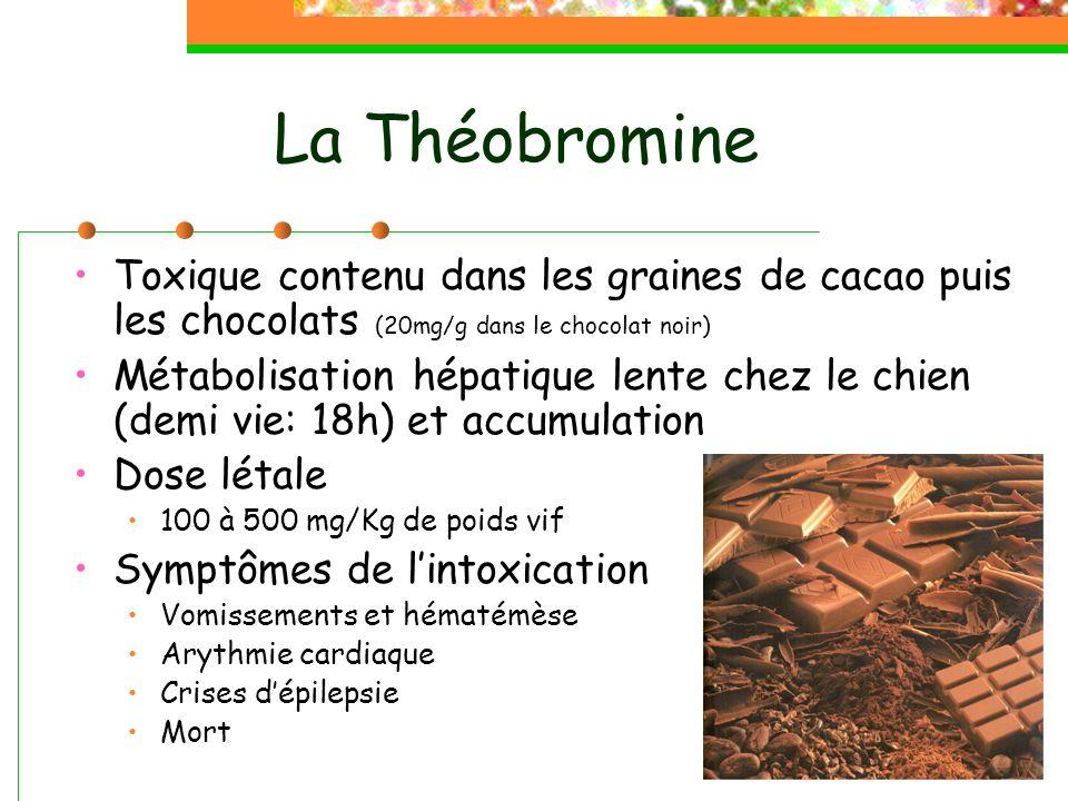 La Théobromine Toxique contenu dans les graines de cacao puis les chocolats (20mg/g dans le chocolat noir) Métabolisation hépatique lente chez le chien (demi vie: 18h) et accumulation Dose létale 100 à 500 mg/Kg de poids vif Symptômes de lintoxication Vomissements et hématémèse Arythmie cardiaque Crises dépilepsie Mort