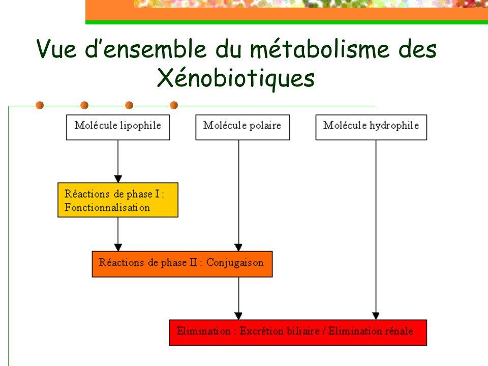 Vue densemble du métabolisme des Xénobiotiques