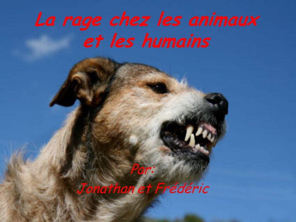 La rage chez les animaux et les humains Par: Jonathan et Frédéric