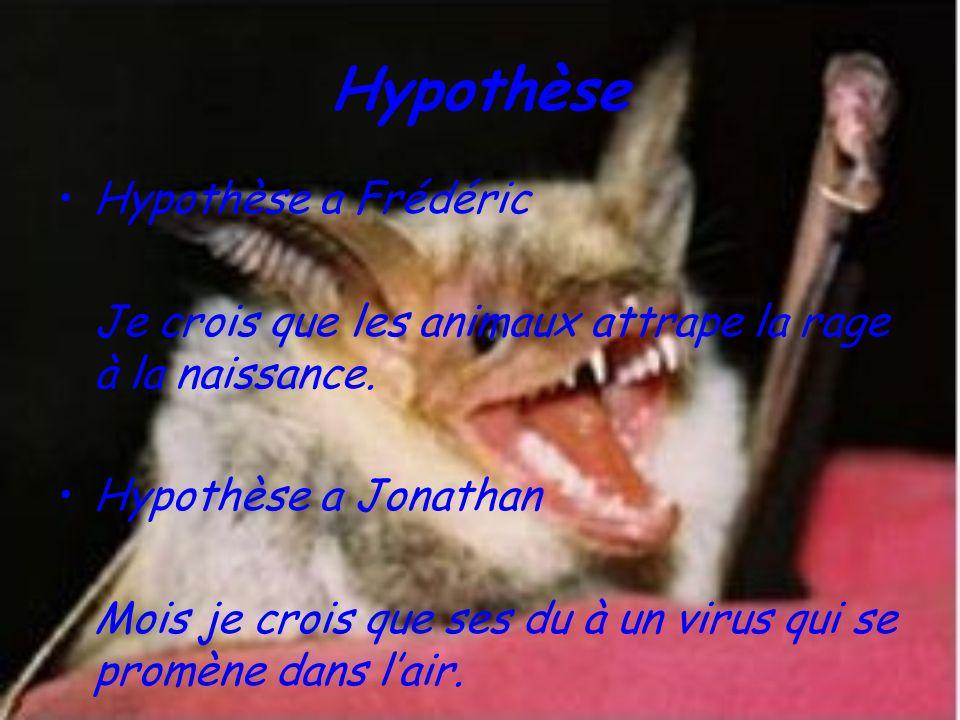 Hypothèse Hypothèse a Frédéric Je crois que les animaux attrape la rage à la naissance. Hypothèse a Jonathan Mois je crois que ses du à un virus qui s