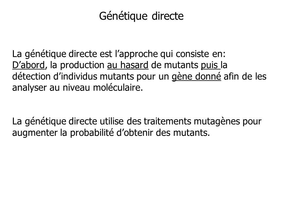 Génétique directe La génétique directe est lapproche qui consiste en: Dabord, la production au hasard de mutants puis la détection dindividus mutants