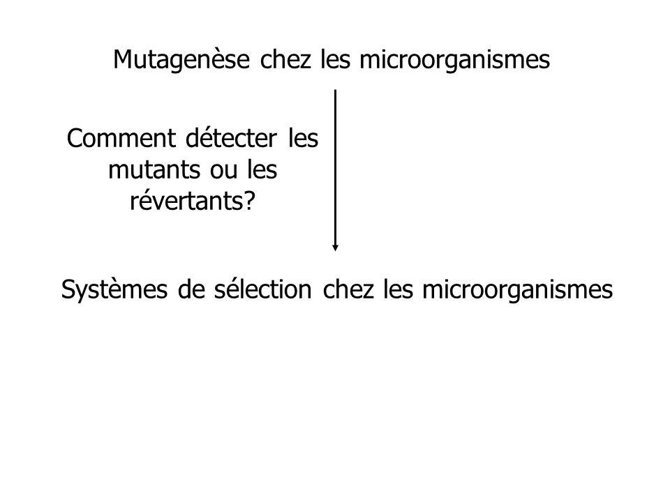 Systèmes de sélection chez les microorganismes Mutagenèse chez les microorganismes Comment détecter les mutants ou les révertants?