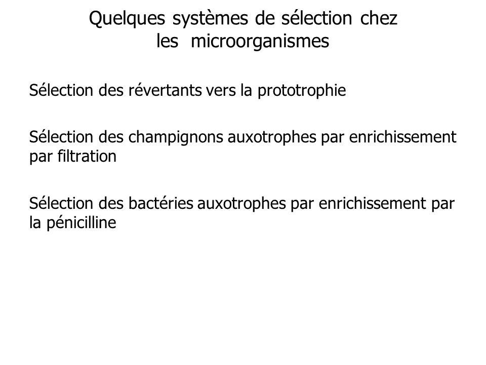 Quelques systèmes de sélection chez les microorganismes Sélection des révertants vers la prototrophie Sélection des champignons auxotrophes par enrich