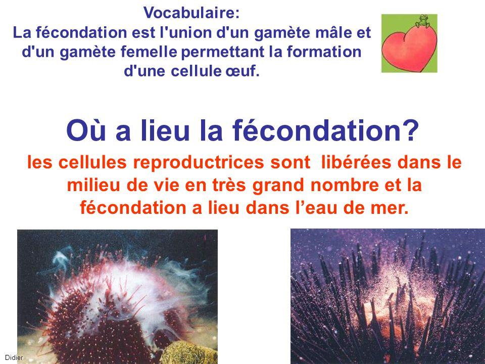 Vocabulaire: La fécondation est l'union d'un gamète mâle et d'un gamète femelle permettant la formation d'une cellule œuf. les cellules reproductrices