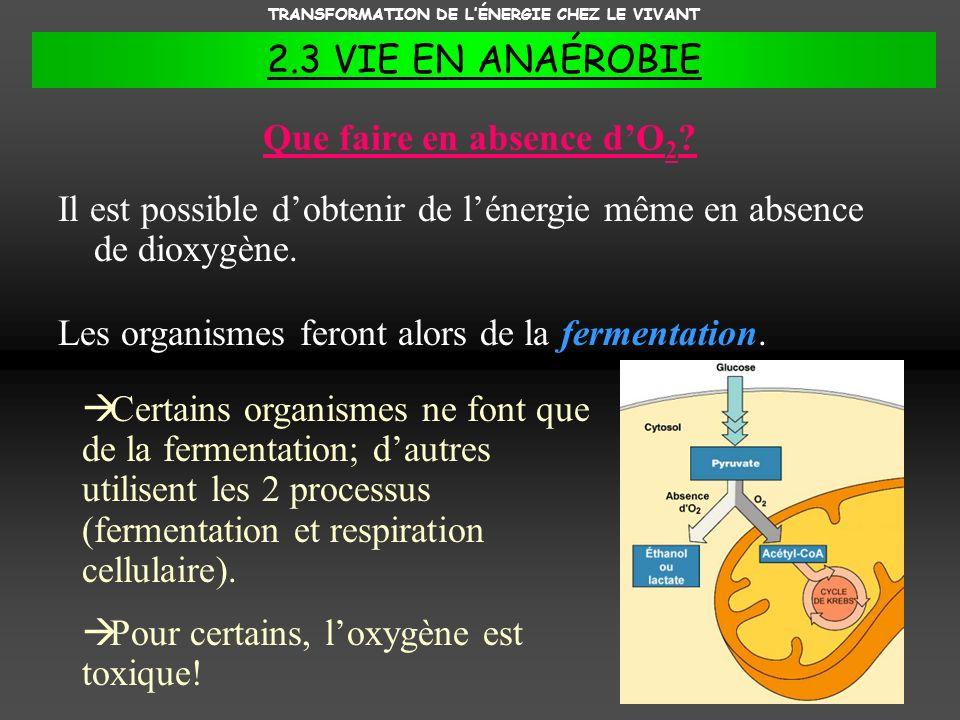 TRANSFORMATION DE LÉNERGIE CHEZ LE VIVANT 2.3 VIE EN ANAÉROBIE Que faire en absence dO 2 ? Il est possible dobtenir de lénergie même en absence de dio