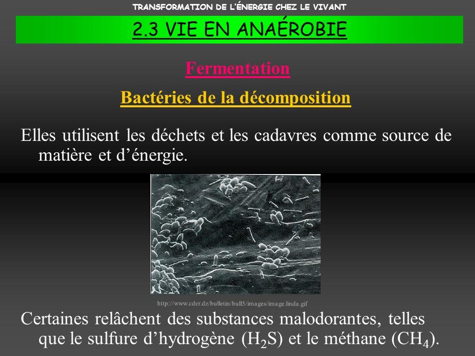 TRANSFORMATION DE LÉNERGIE CHEZ LE VIVANT 2.3 VIE EN ANAÉROBIE Fermentation Elles utilisent les déchets et les cadavres comme source de matière et dén