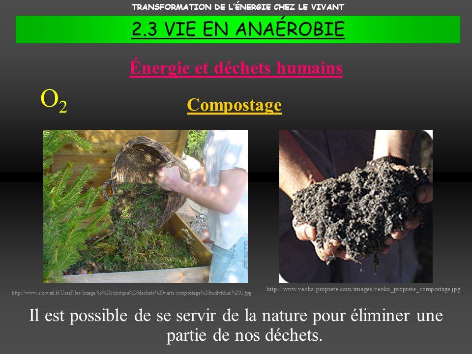 TRANSFORMATION DE LÉNERGIE CHEZ LE VIVANT 2.3 VIE EN ANAÉROBIE Énergie et déchets humains Il est possible de se servir de la nature pour éliminer une