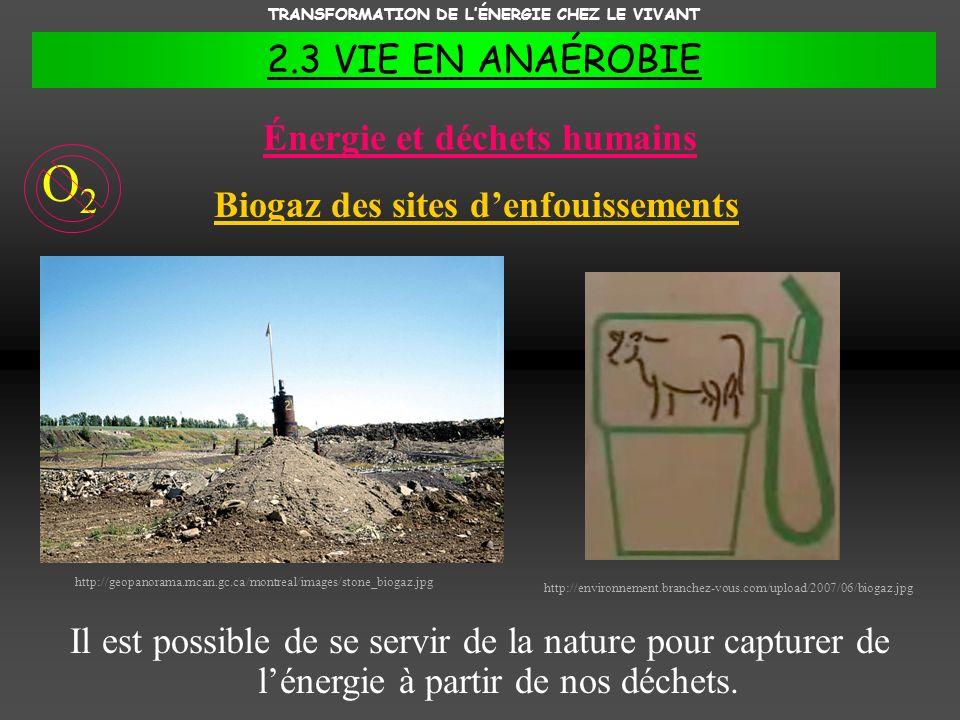 TRANSFORMATION DE LÉNERGIE CHEZ LE VIVANT 2.3 VIE EN ANAÉROBIE Énergie et déchets humains Il est possible de se servir de la nature pour capturer de l