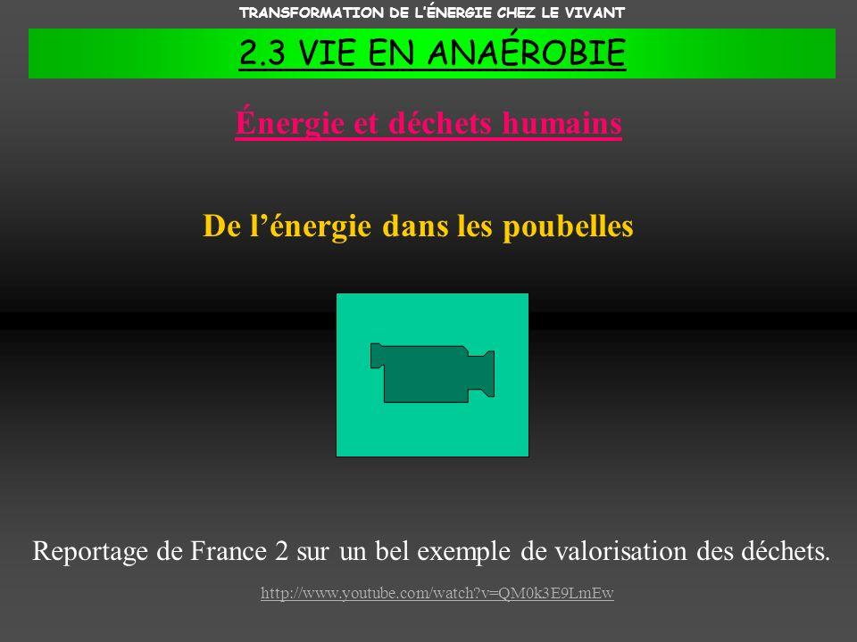 TRANSFORMATION DE LÉNERGIE CHEZ LE VIVANT 2.3 VIE EN ANAÉROBIE Énergie et déchets humains De lénergie dans les poubelles Reportage de France 2 sur un